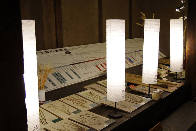 日本酒づくりを支える生物進化~イネの系統を説明:「自然史博物館が仕かける 「Where culture meets nature」展」赤坂志乃