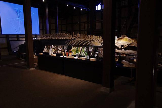 酒蔵にクジラの骨格標本が鎮座。日本酒を彩る多様な生きものと題して、日本酒のラベルに登場するさまざまな生物を紹介:「自然史博物館が仕かける 「Where culture meets nature」展」赤坂志乃