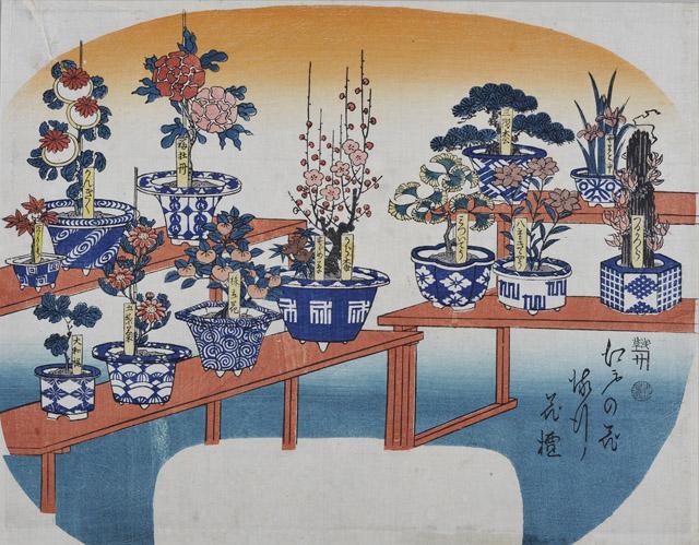江戸の花流行花壇 無款 個人蔵