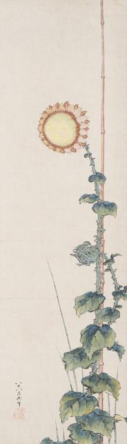 葛飾北斎《向日葵図》紙本1幅 弘化4年(1847) シンシナティ美術館  Cincinnati Art Museum, The Thoms Collection-Given by Mrs. Murat H. Davidson in Honor of her Grandfather, Joseph C. Thoms, 1982.15  通期展示:「新・北斎展 HOKUSAI UPDATED」森アーツセンターギャラリー