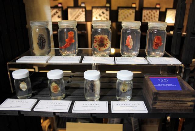 妖艶な色をしたウミウシたち。「ハナデンシャ」「カグヤヒメウミウシ」「メレンゲウミウシ」など名前もユニークで想像力を掻き立てられます