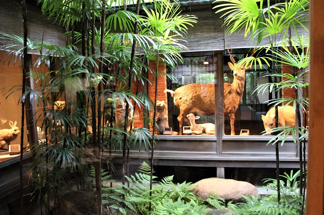 坪庭超しに出迎えてくれるのは、京都近辺に生息する動物たち